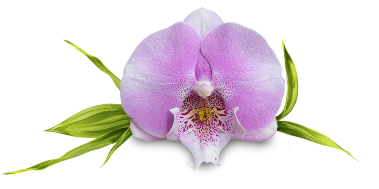 orchid (1)