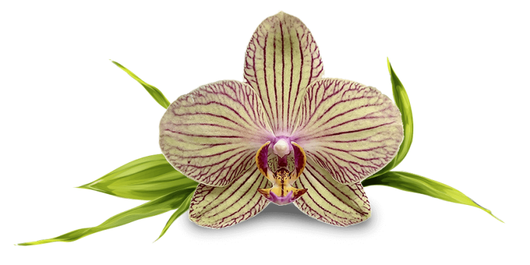 orchid2 (1)