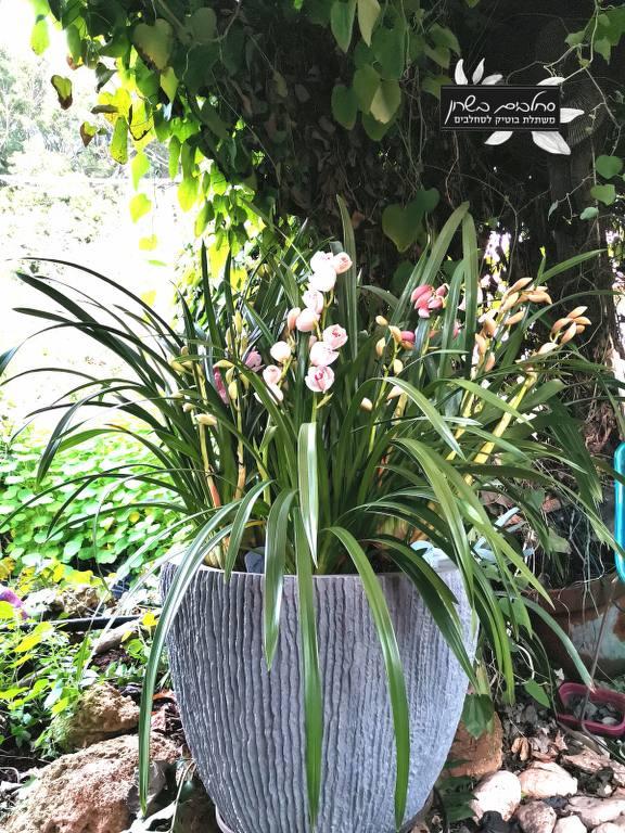 סידור סחלבים אהבה בג'ונגל